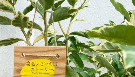 泉北レモン植樹より1か月☆